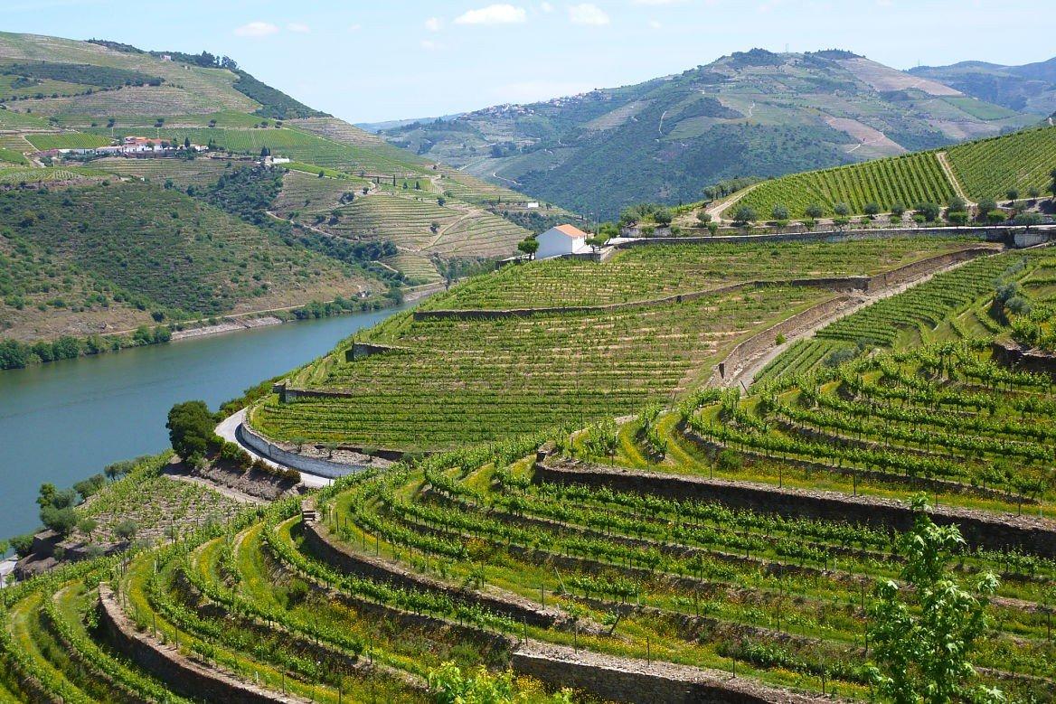 Vignobles, vallée du Douro
