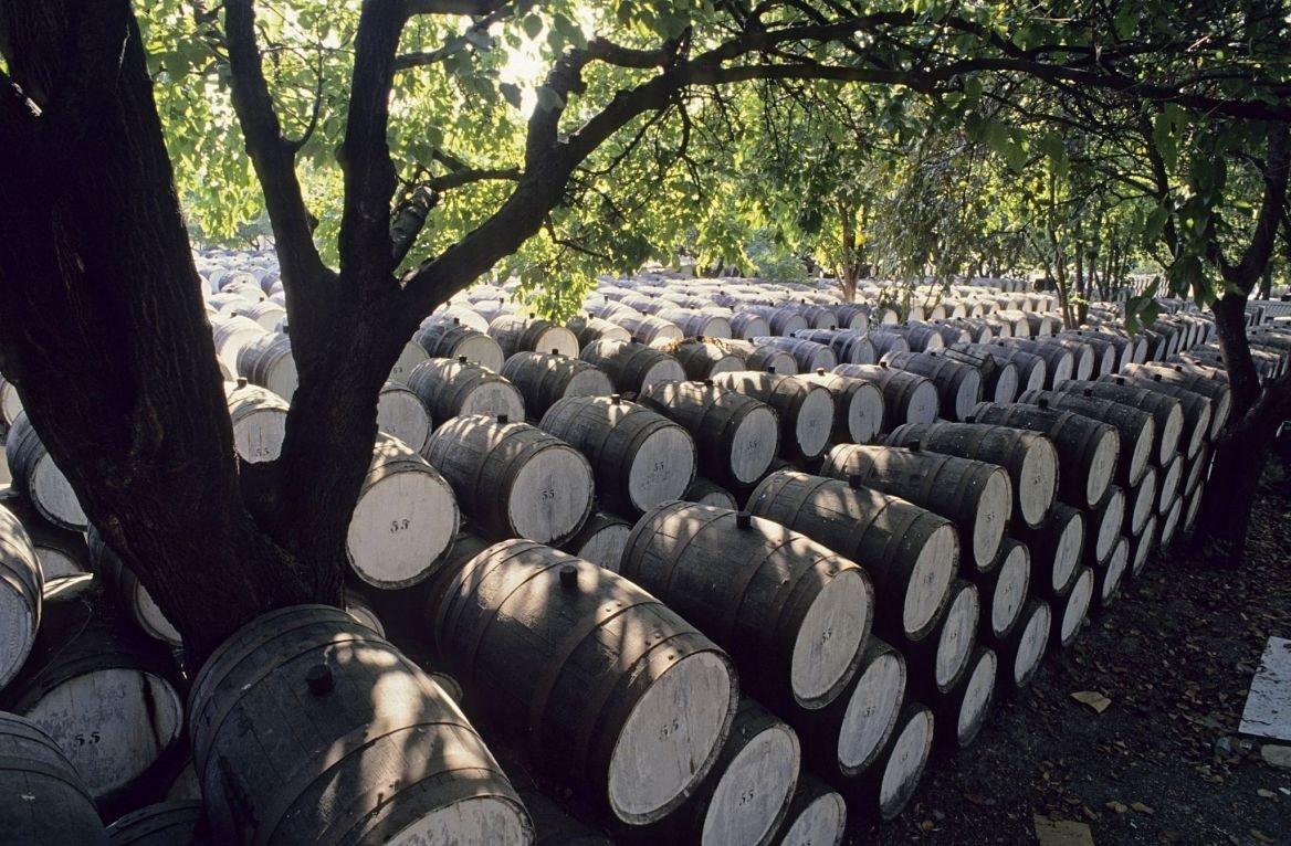 Barriques de vin au soleil, Chypre