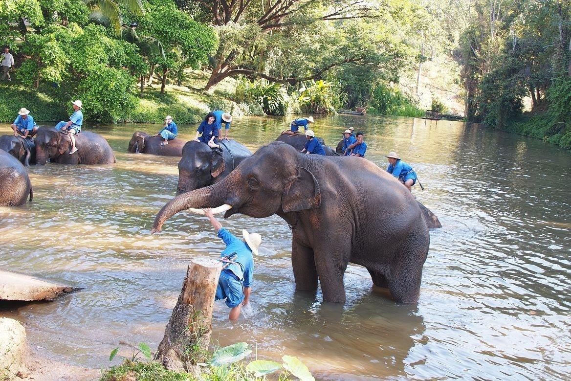 Le Thai Elephant Conservation Center, Lampang, Thaïlande