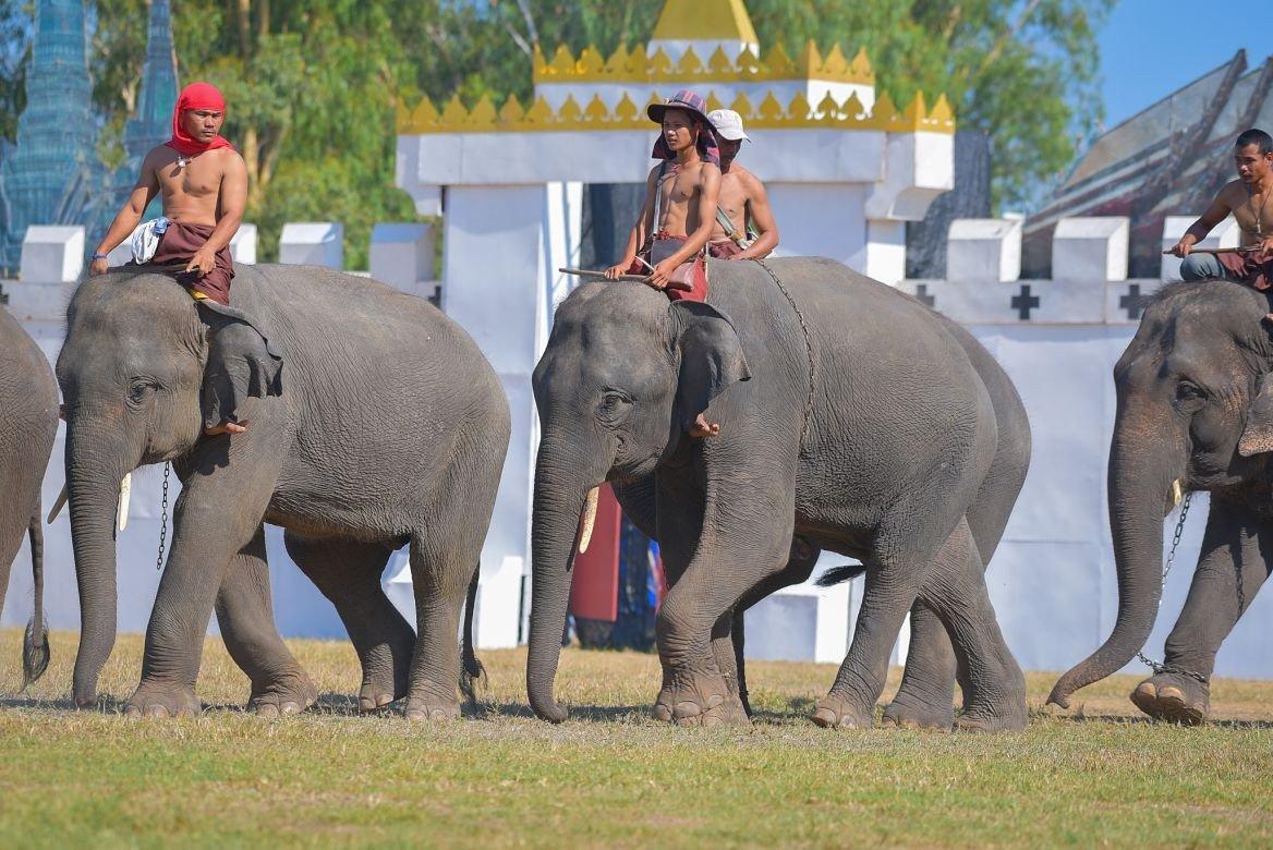 Festival des éléphants, Surin, Thaïlande