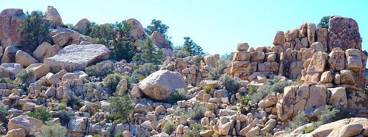 À la découverte de Joshua Tree National Park