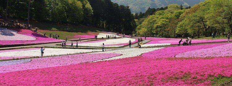 Chichibu, le Japon des champs à deux pas de Tokyo