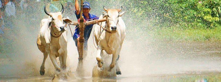Vietnam : si vous aimez…