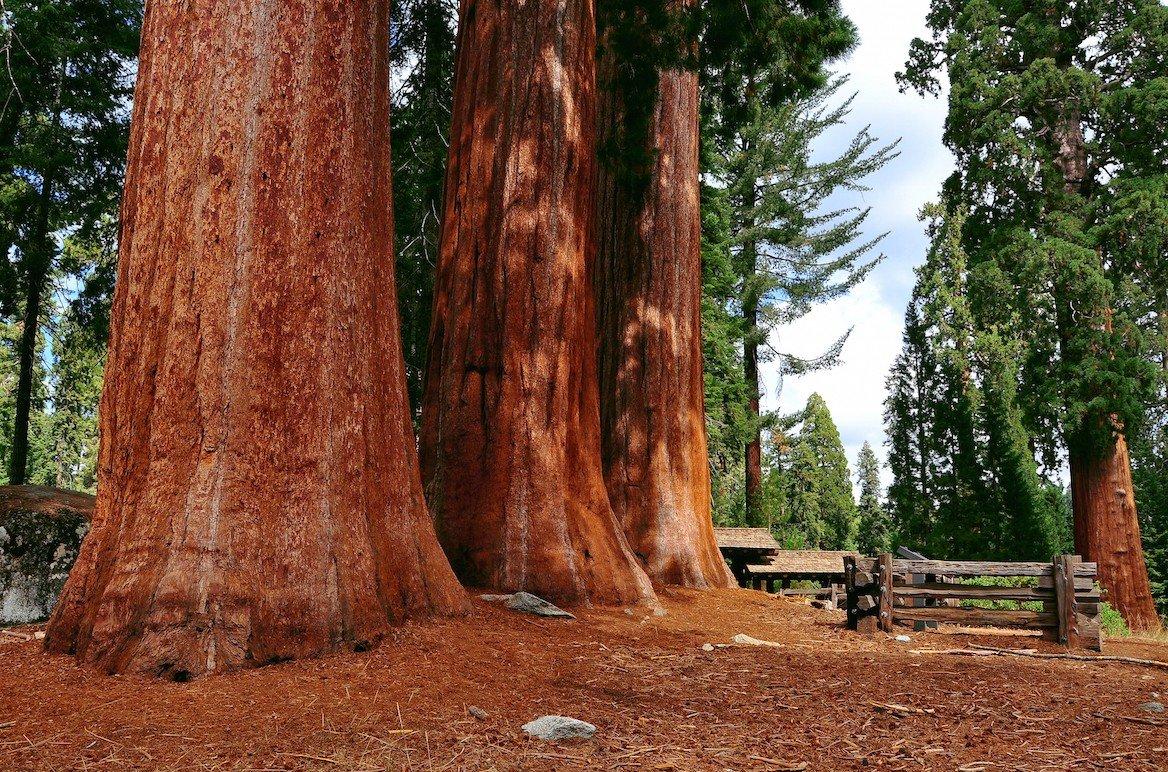 Séquoias géants à Sequoia National Park