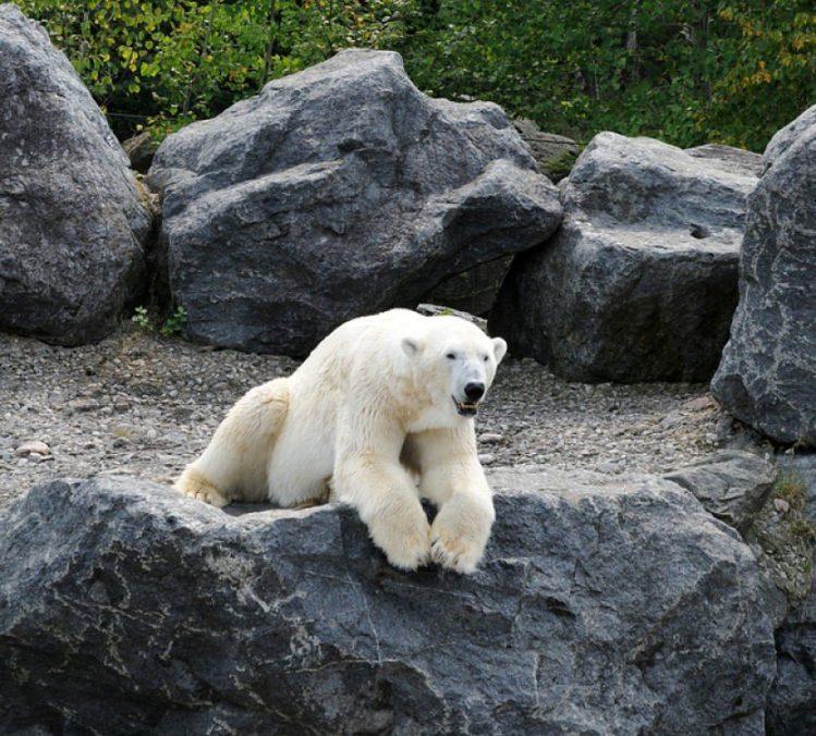 Ours dans le Zoo sauvage québec