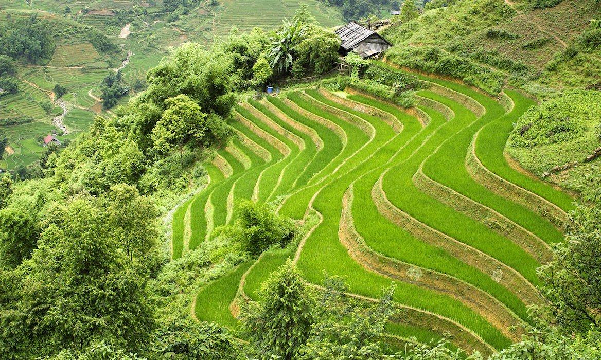 Rizières en terrasse, Sa Pa, Vietnam