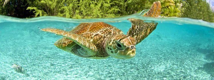 Polynésie : embarquez pour des îles de rêve