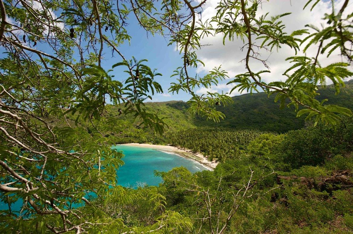 L'arboretum de Papuakeikaa © Tim Mckenna