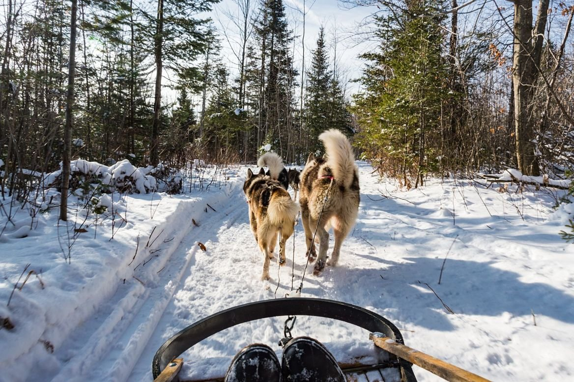 activité-hiver-chiens-traineau