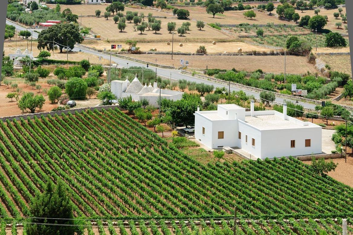 Un champs de vigne dans la vallée d'Itria en Italie.