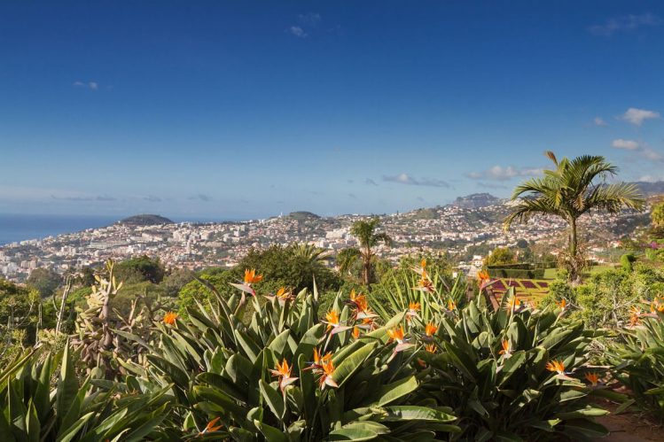 funchal madere jardin botanique vacances mai