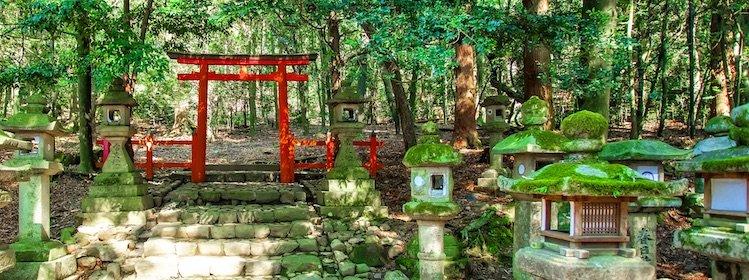 Japon: comment visiter Nara ?
