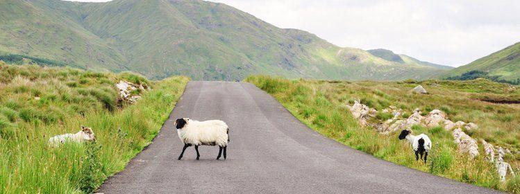 Organiser un road trip en Irlande