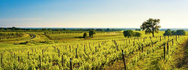 Toscane : les plus belles routes des vins