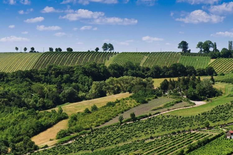 Les vignes de Vienne - activité randonnée
