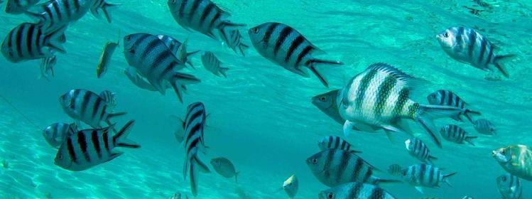 6 activités à l'Île Maurice