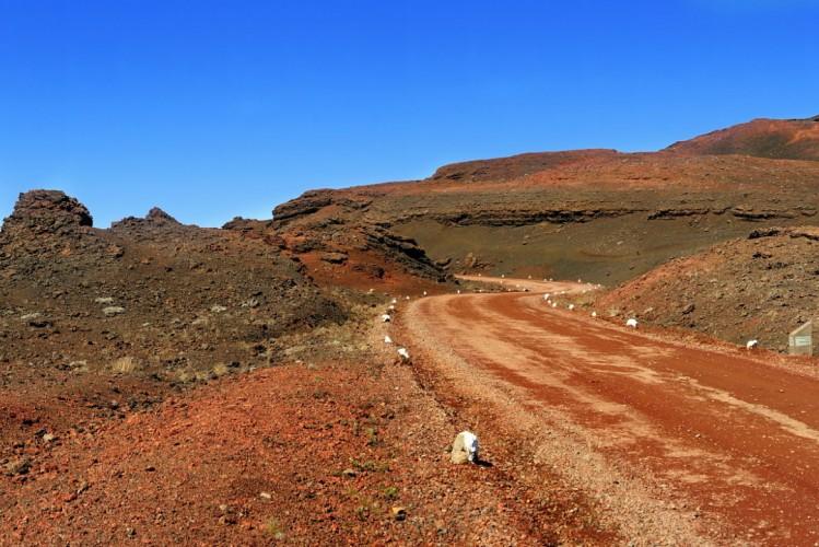 La plaine des Sables pour une activité balade à cheval à La Réunion