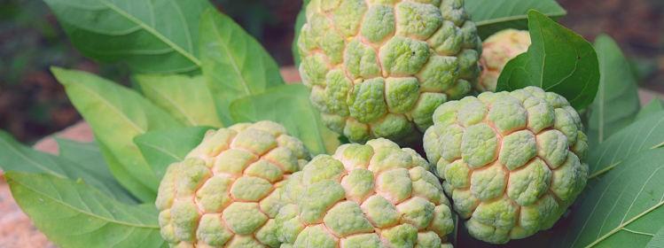 Nouvelle-Calédonie: 10spécialités à goûter