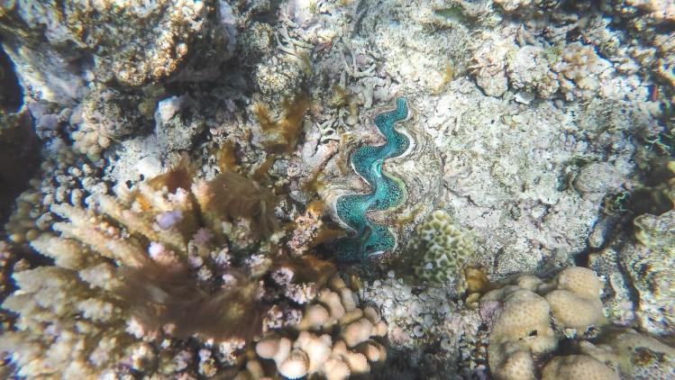 Nouvelle-Caledonie Pleiades Snorkeling