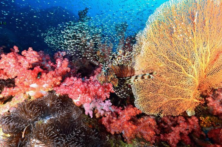 mer plongée récif corail nature thaÏlande