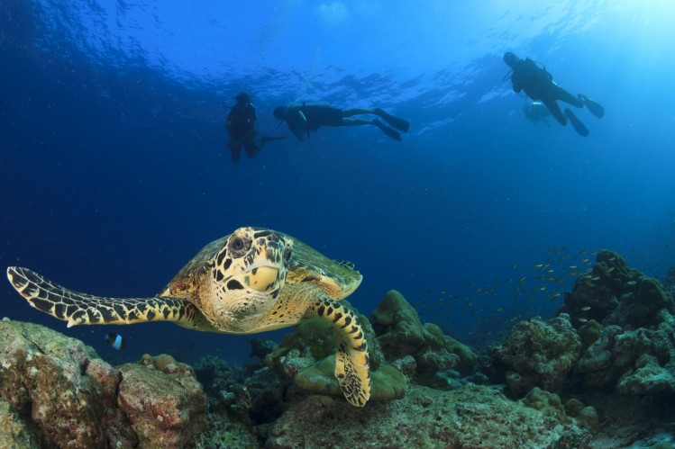 mer plongée thaïlande tortue