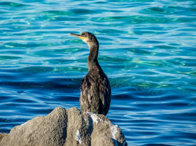 Mer oiseau sardaigne