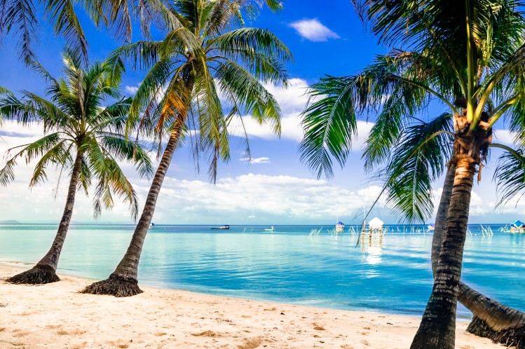 plage vietnam cocotier
