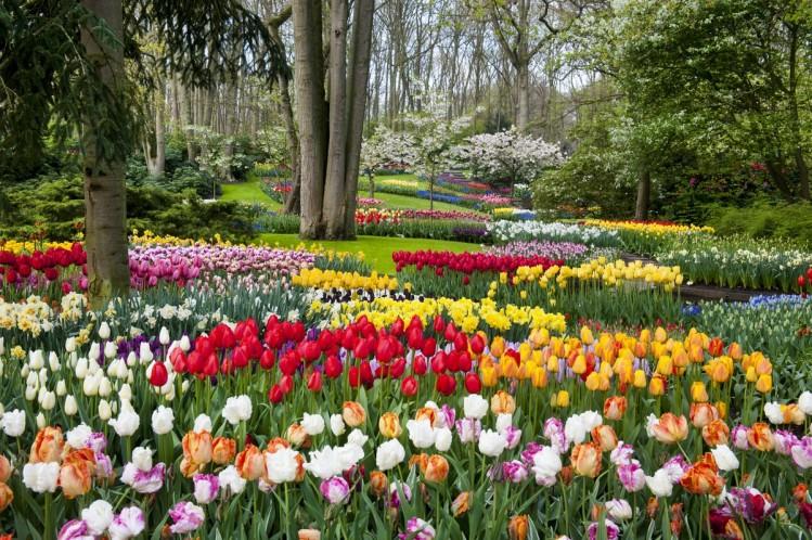 amsterdam lisse parc tulipes