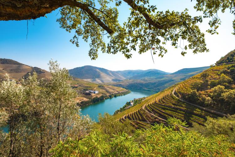 Portugal vignoble panorama vallée Douro
