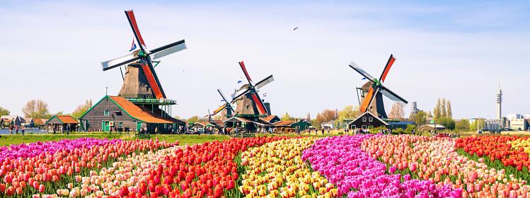 Que faire dans les environs d'Amsterdam ?