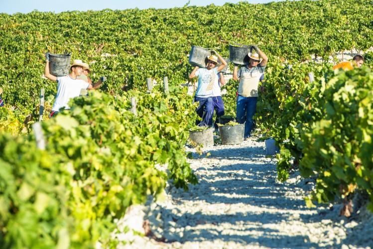 vigne andalousie jerez de la frontera insolites
