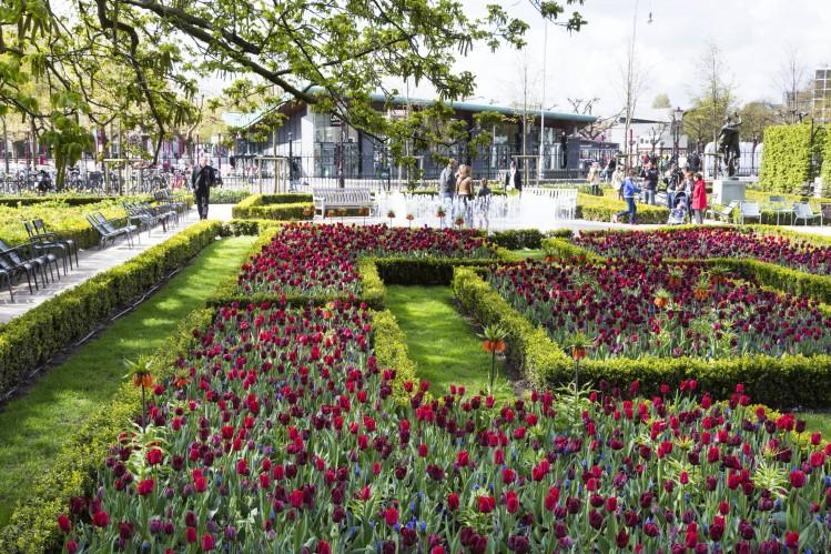 amsterdam jardins tulipes Rijksmuseum