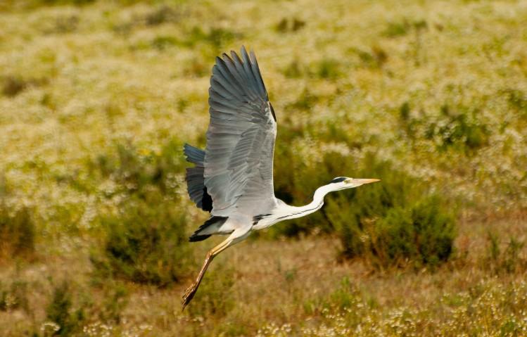 andalousie oiseau activites decouverte