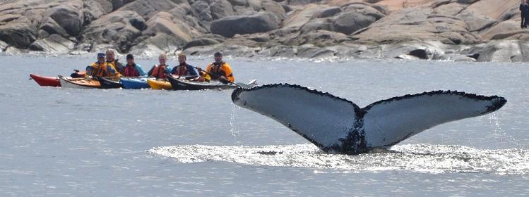 Québec : où observer les baleines?