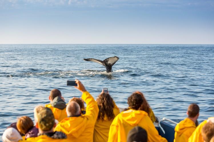 quebec baleine parc forillon tadoussac saint laurent nature
