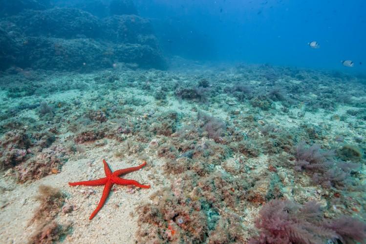 grenade andalousie plongee mer