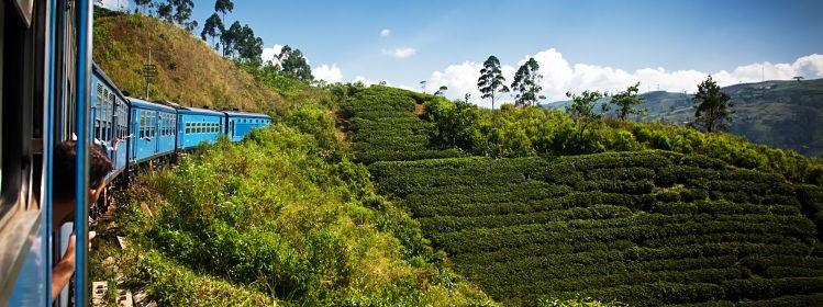 Voyager au Sri Lanka: tout ce qu'il faut savoir
