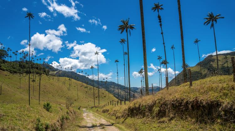 vallee de Cocora Colombie