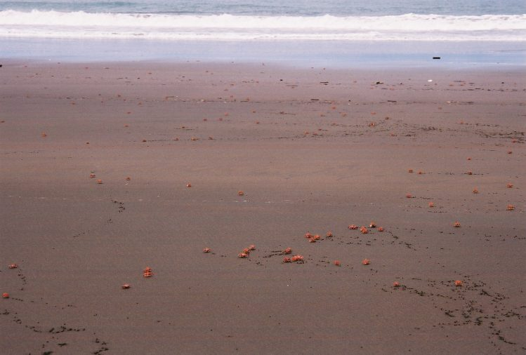Playa Almejal Colombie plages
