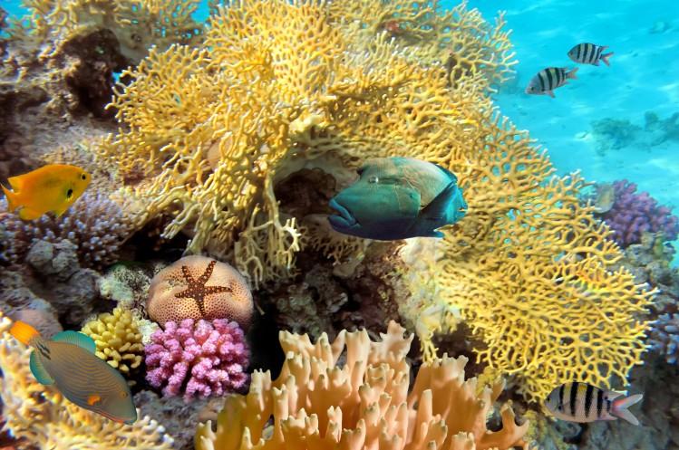 Cuba plongee snorkeling coraux