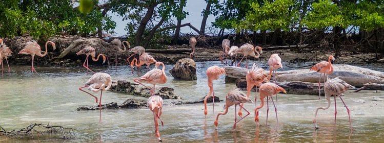 Colombie: où observer la faune?