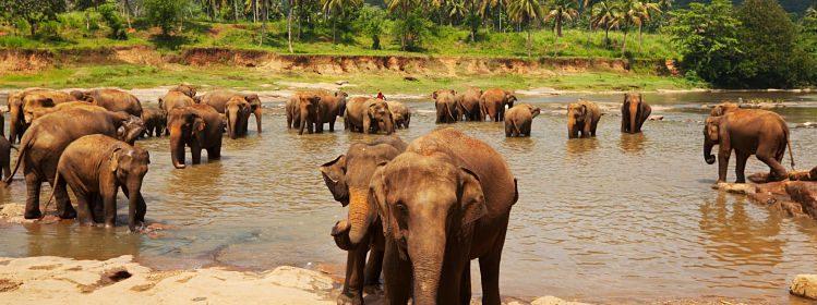 Sri Lanka : nos incontournables