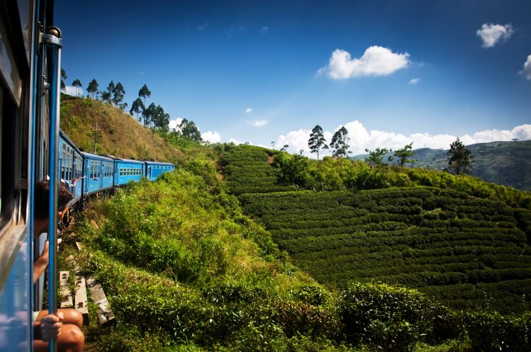 plantations de thé sri lanka incontournable