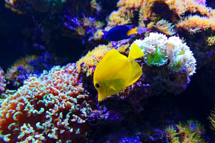 sri lanka fonds marin plongée
