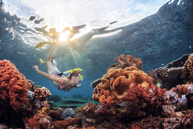 coraux île menjangan bali voyage enfants