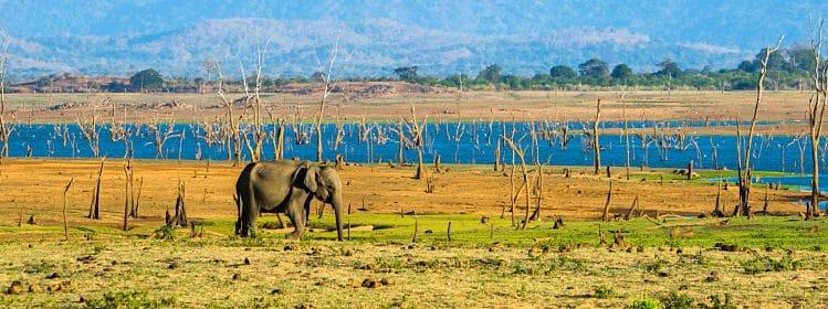 Itinéraire de 12jours au Sri Lanka