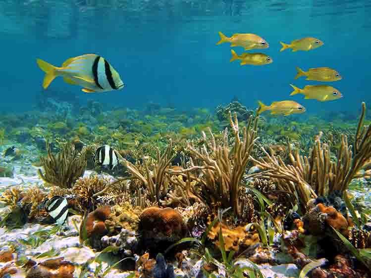 récif corallien littoral caribéen