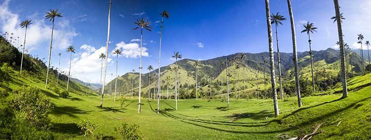 Vallée Cocora