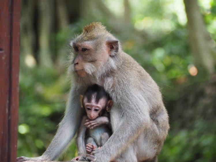forêt des singes ubud bali voyage enfants