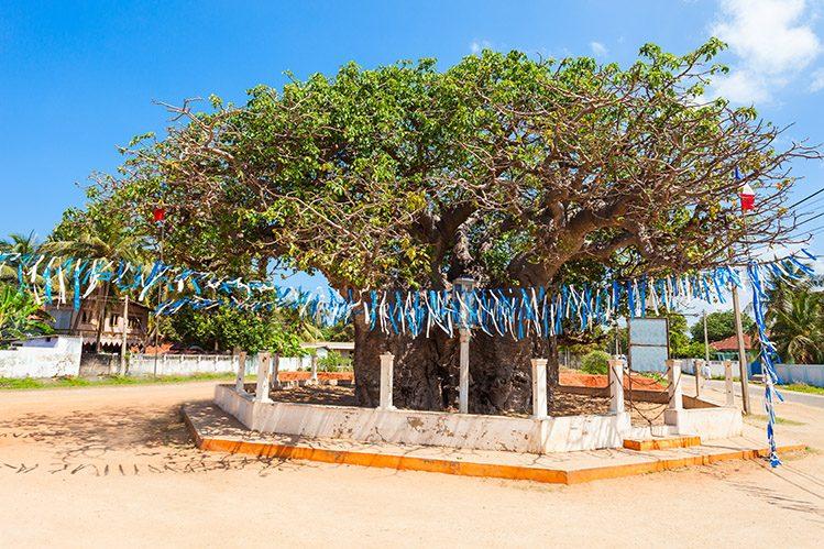 baobab géant Mannar Sri Lanka